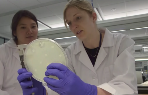 Members of Lance's lab check bacteria swabbed from store-bought chicken for resistance.