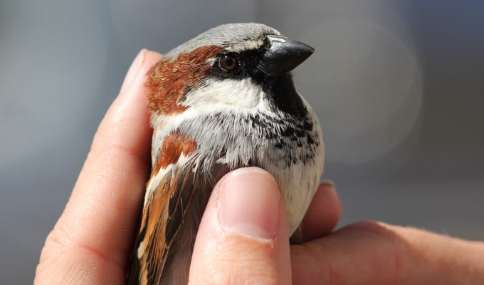 A warming climate causes birds to shrink, study shows