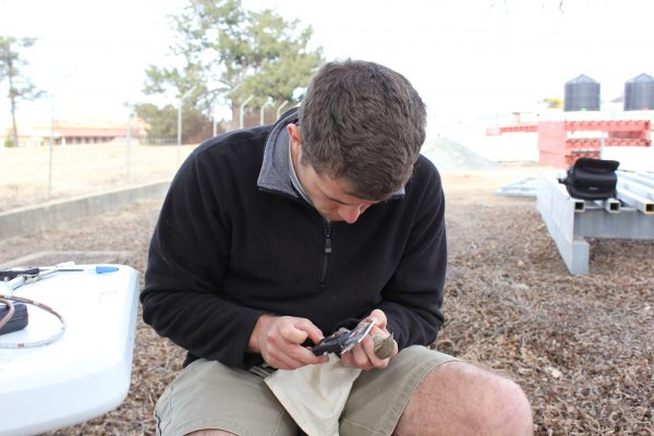 Andrew performs measurements on a house sparrow in the field | Miles O'Brien Productions