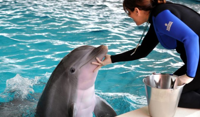 Dolphins raised in captivity will soon get a new, more natural home