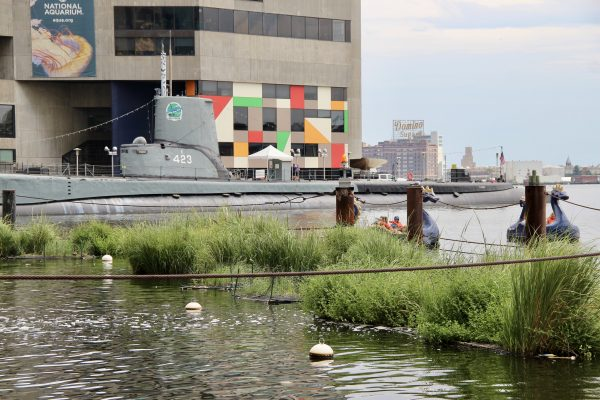 Floating wetlands dot the waterfront, seen here in front of the National Aquarium. Photo: Healthy Harbor. | Miles O'Brien Productions
