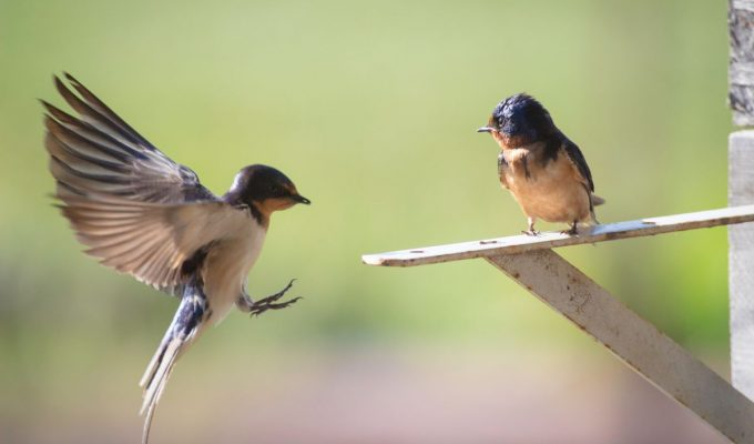 Human activity may be changing how birds communicate | Miles O'Brien Productions