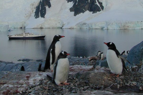 The Antarctic peninsula is one of WWF's most biodiverse places. Photo: Tracy Shea. | Miles O'Brien Productions