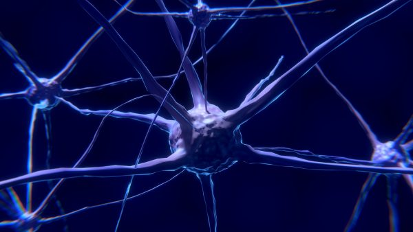 The debate whether adults can grow new neurons rages on | Miles O'Brien Productions