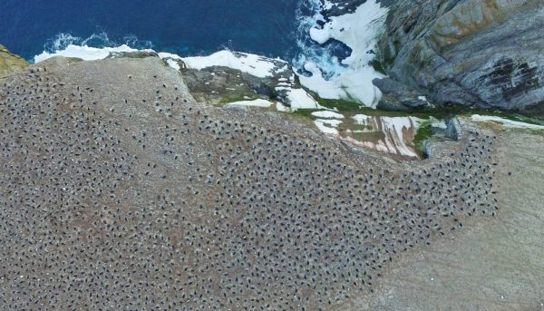 Drone imagery of newly discovered penguin colony | Miles O'Brien Productions