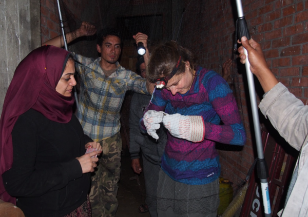 Amanda Hund removing a bat from a net in Egypt, with our collaborators Dr. Basma Sheta and Mamdouh Ahmed. Photo: Liz Scordato. | Miles O'Brien Productions
